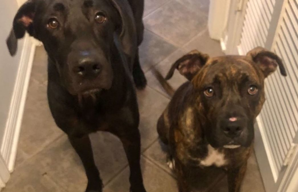 Just Do Right, and the Tale of My Two Rescue Dogs